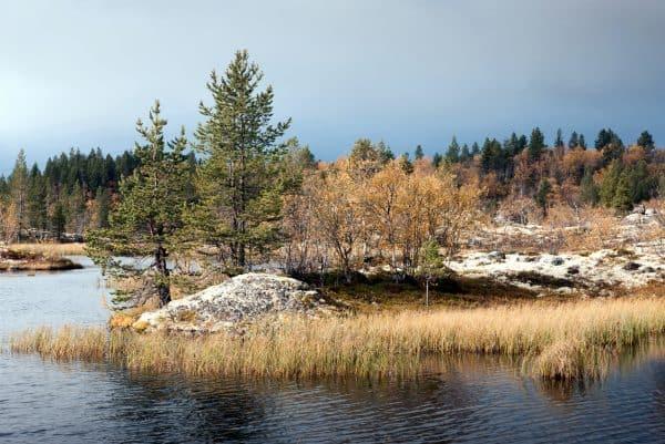 Заветные сосенки на озере между Мурманском и Видяево