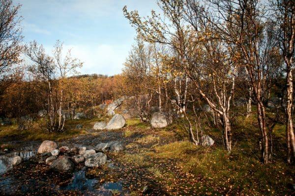 Не берегу озера Питьевое в окрестностях Видяево